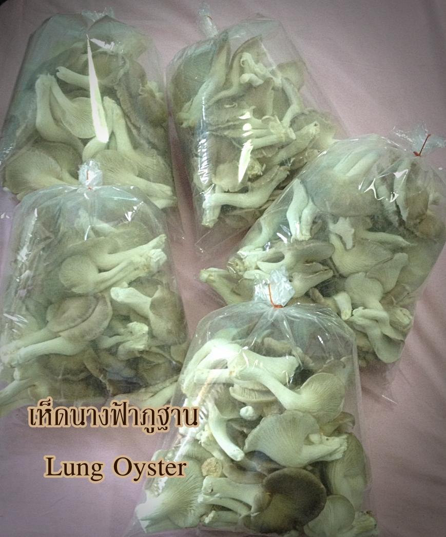 เห็ดนางฟ้าภูฐาน (Lung Oyster)