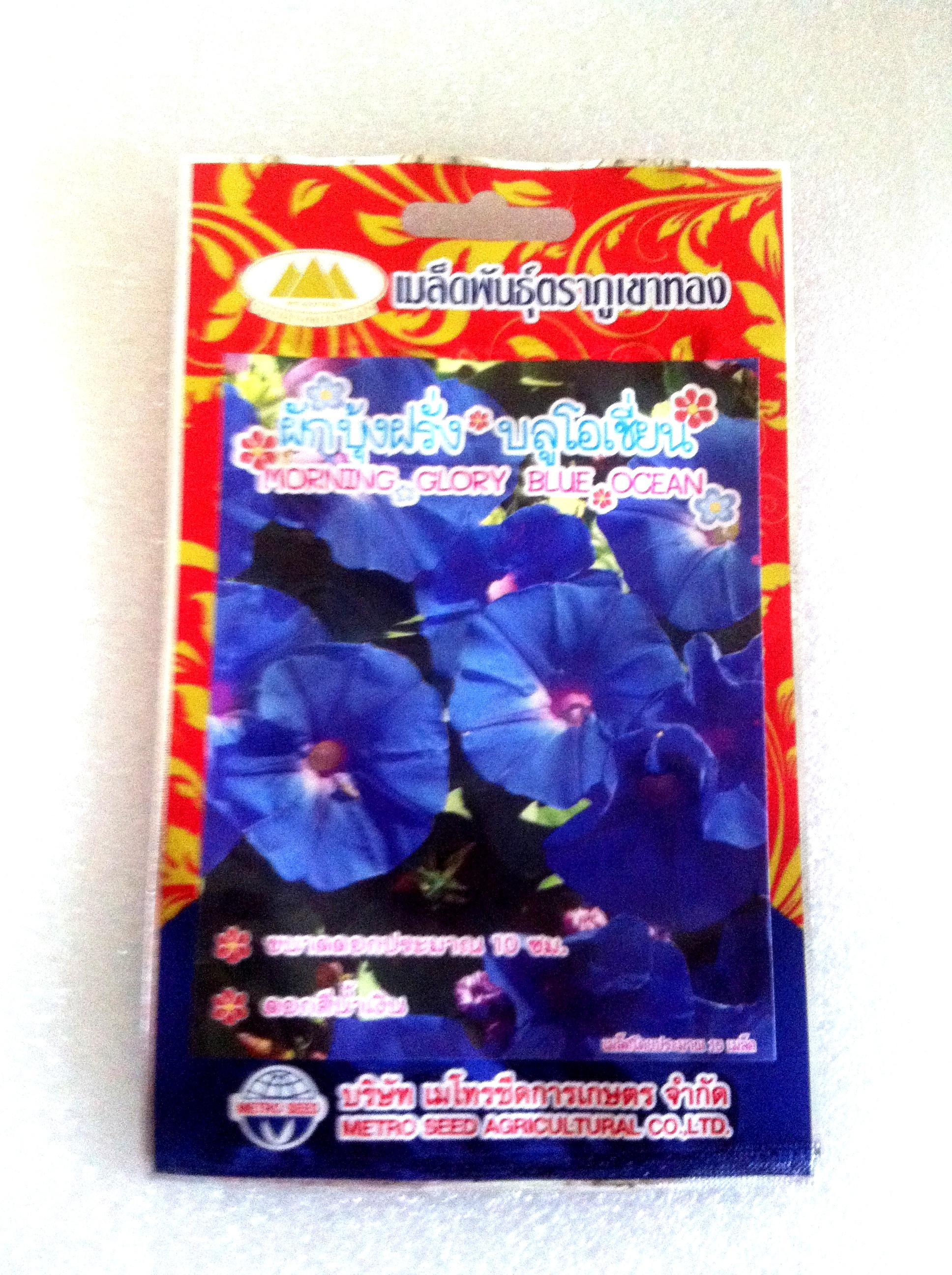 ดอกผักบุ้งฝรั่งบลูโอเชี่ยน Morning glory blue ocean ภูเขาทอง